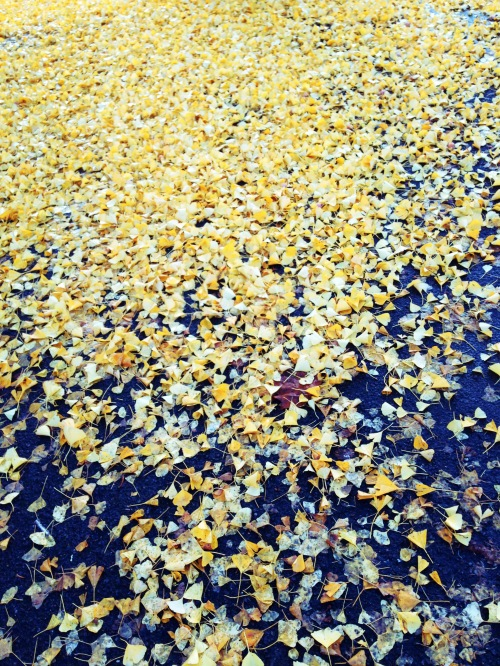carpet of gold_edited-1